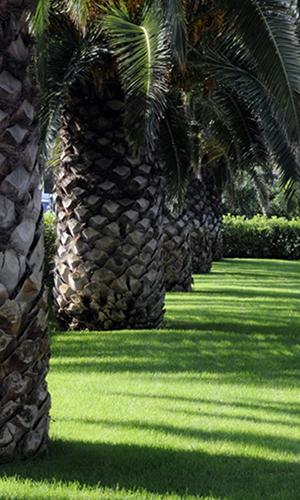parco_giardino